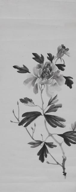 花卉画稿-646