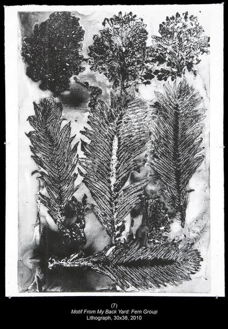 来自我后院的图案:蕨簇